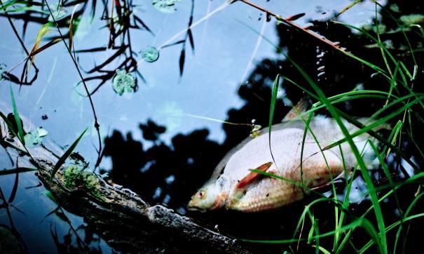 Мор рыбы на озерах