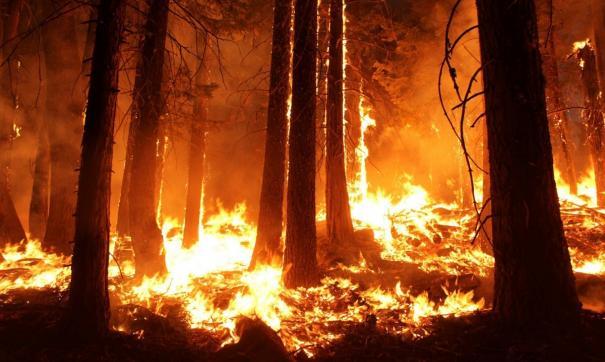 На территории Абазинского лесничества продолжается борьба с огнем в труднодоступной таежной местности