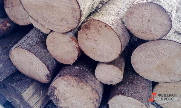 Незаконная вырубка хвойных деревьев