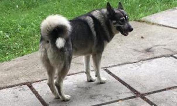 Пес спас ребенка от собак, но пал жертвой безработного