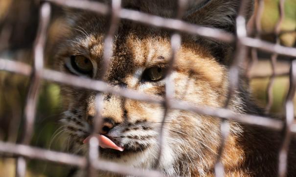 Зоопарк сможет потратить деньги на покупку кормов