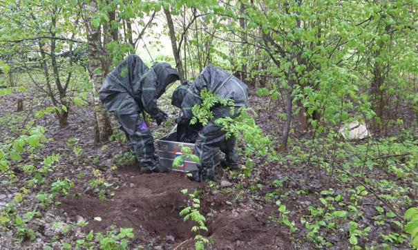 В лесу под Брянском нашли почти 30 кг ртути
