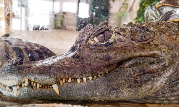 «Роснефть» оказала поддержку приморскому зоопарку «Садгород»