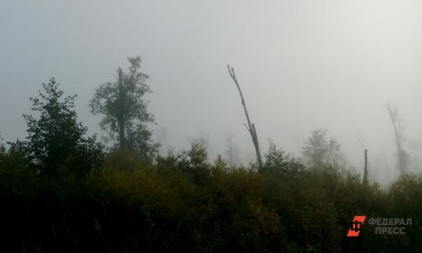 В Новосибирской области число лесных пожаров сократилось на 8 процентов