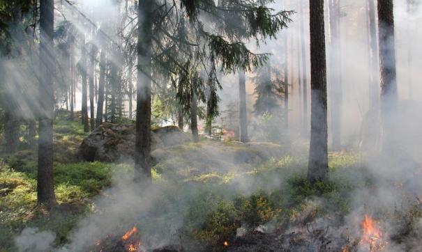 Главы муниципалитетов обязаны ликвидировать лесные пожары за сутки