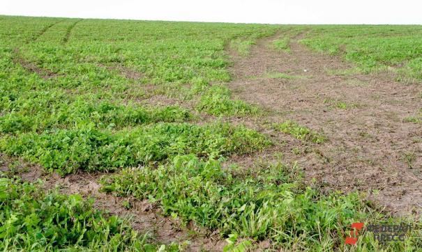 Из-за карантина оренбургские бахчеводы рискуют остаться без урожая