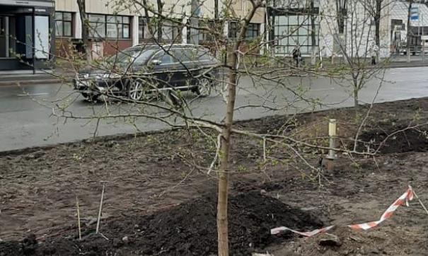 В этом году в Челябинске началось масштабное озеленение