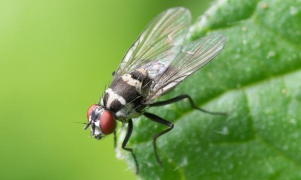 Могут ли клещи и мухи заразить коронавирусом? Ответы экспертов
