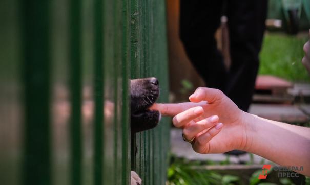 За месяц костромичи собрали местному приюту для животных 800 тысяч рублей