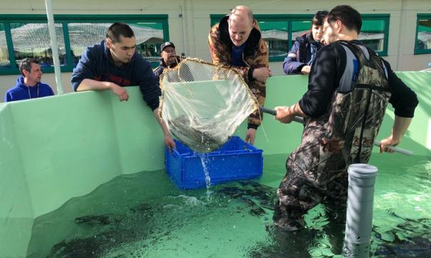 Более тысячи особей стерляди выпустили в Обь на Ямале