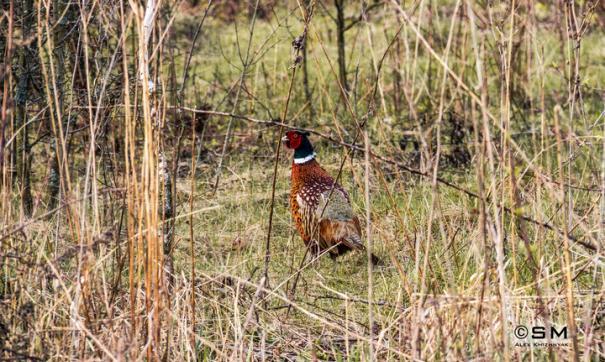 Традиционные виды охоты остались доступны коренным народам