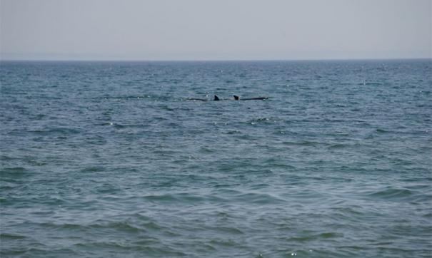 Французский океанолог призвал Путина поддержать запрет на вылов китов