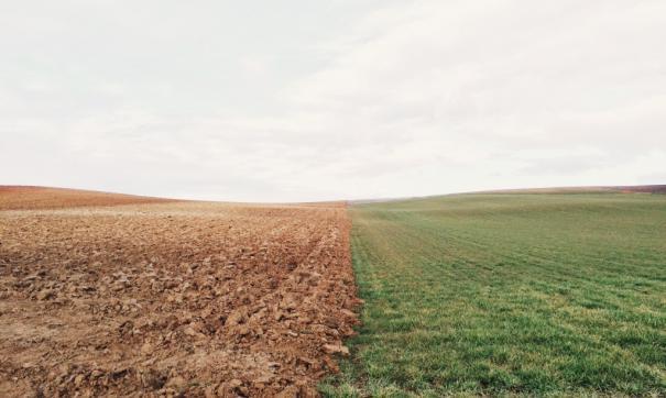 На юге Новосибирской области засуха