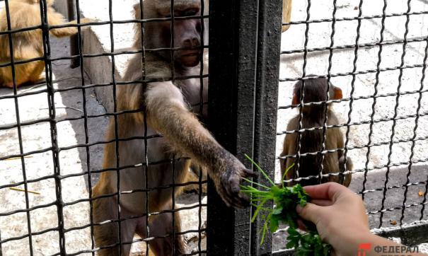 Новосибирский зоопарк откроется 24 июня