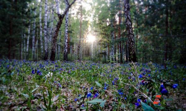 Жителям Тольятти запретили гулять в лесу