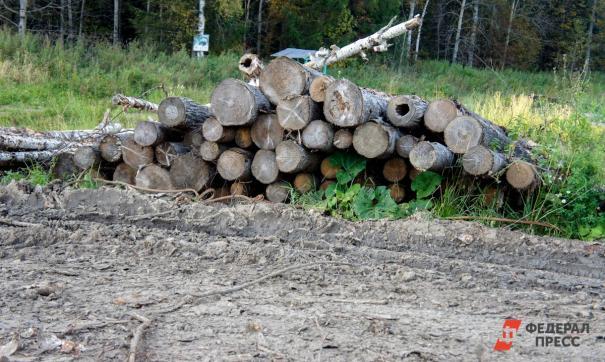 Житель Злоказово должен был вырубить все деревья, кроме краснокнижных