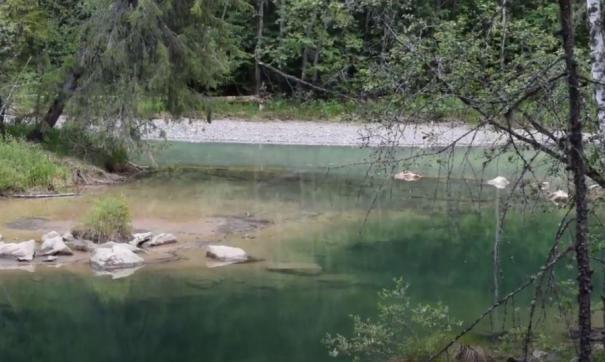 На Шегультане впервые отмечена гибель прибрежного леса