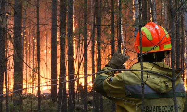 За сутки в Югре загорелось почти 3398 га леса