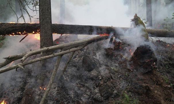 На Урале в заповеднике «Денежкин Камень» пожар охватил 30 гектаров леса