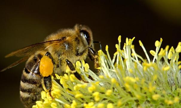 Полиция проверяет факты массовой гибели пчелиных ульев