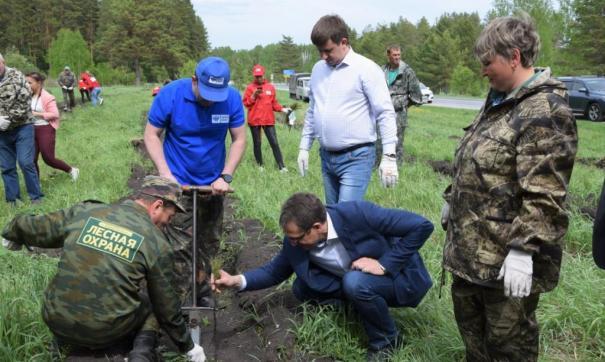 В иркутском заказнике восстановят лес после незаконной вырубки