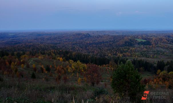 В 2020 году в Нижегородской области высадят 1000 гектаров новых лесов