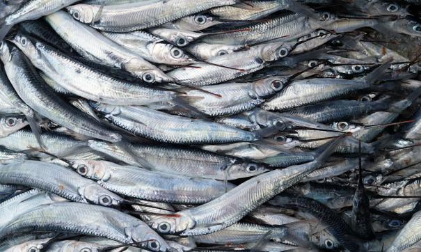 Рыбхозы области будут получать субсидии за 1 кг реализованной продукции