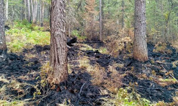 Площадь пожара в заповеднике «Денежкин камень» увеличилась вдвое