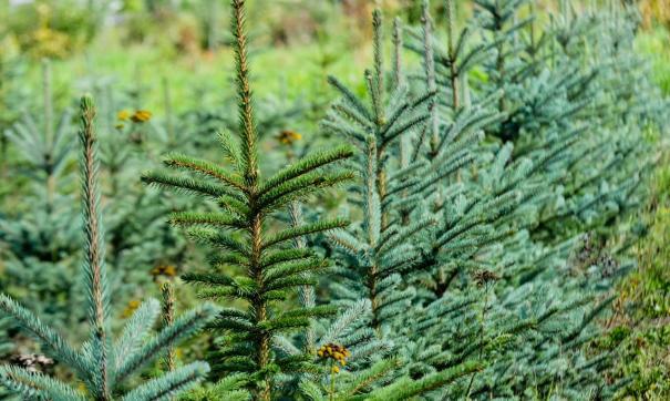 Осенью в Екатеринбурге высадят сотни деревьев и тысячи кустарников