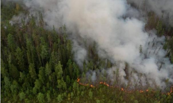 В Томской области площадь лесных пожаров за выходные выросла почти вдвое