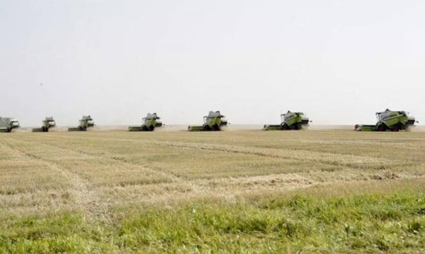 Всего предстоит убрать 417 тысяч гектаров  зерновых