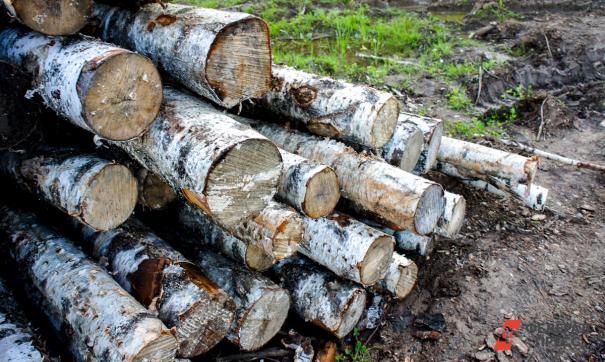 Активисты пытаются помешать вырубке леса