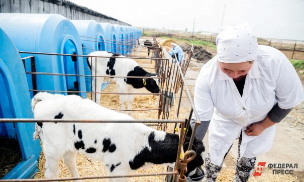 Гранты можно потратить на покупку животных или ремонт фермы