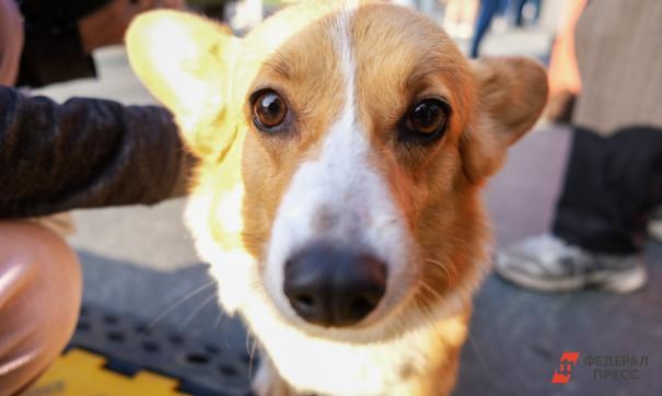 Две собаки пострадали на рейса «Аэрофлота»