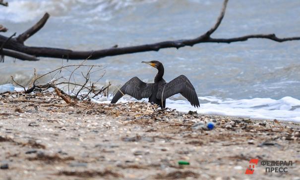 Приморские волонтеры очистили от мусора 25 километров берегов рек и озер