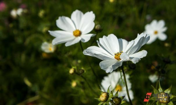 Климатолог заявил о неприятных последствиях долгого бабьего лета