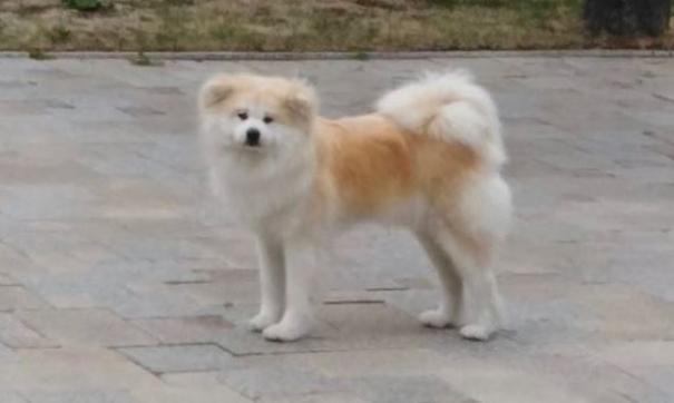 Собака Олега Кожемяко погибла под колесами поезда