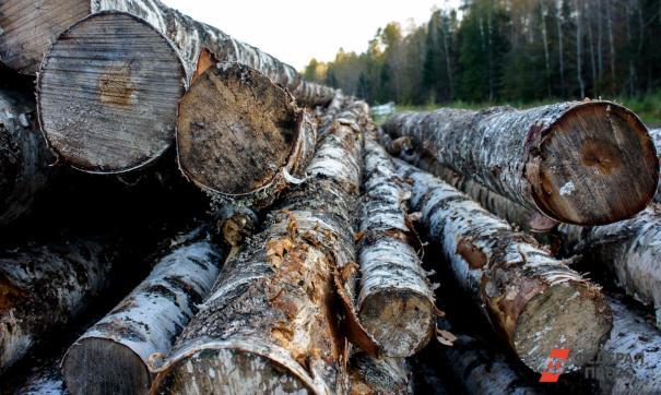 В заказнике «Карегодский» незаконно вырубали деревья