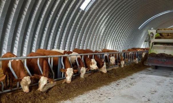 В регионе уделяют внимание развитию животноводства