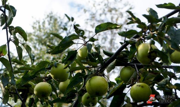 Правительство региона компенсирует затраты садоводов