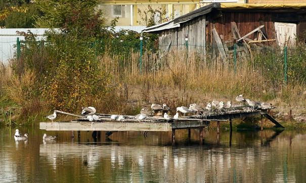 От нашествия птиц на огородах страдают садоводы