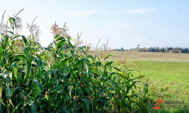 В программе своеобразного «выращивания» примут участие восемь региональных предприятий