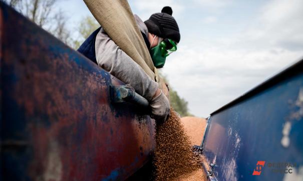 Курс доллара влияет и на стоимость пшеницы
