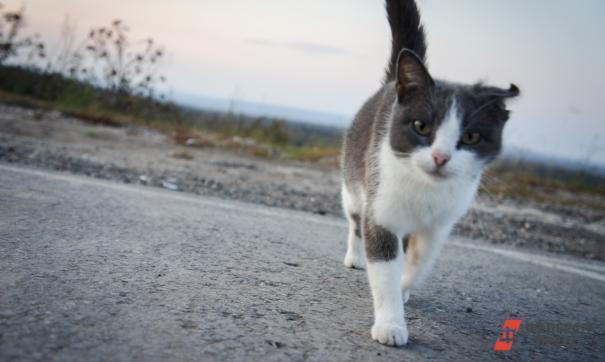 В Камышлове осудят садиста, бросавшего на бетонный пол кошек