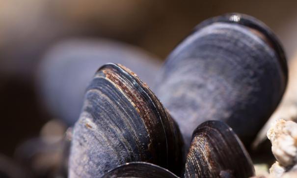 В Магадане обнаружили выброс моллюсков на побережье