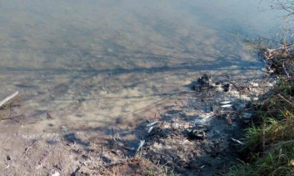 В приморской реке массово гибнет рыба