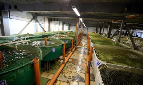 В Томской области открыли рыбоводческий комплекс