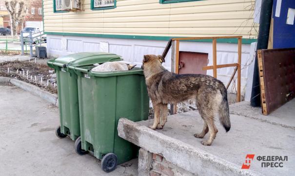 Уральцы страдают от нашествия собак с мусорного полигона. «Боимся за свое здоровье и жизни детей»