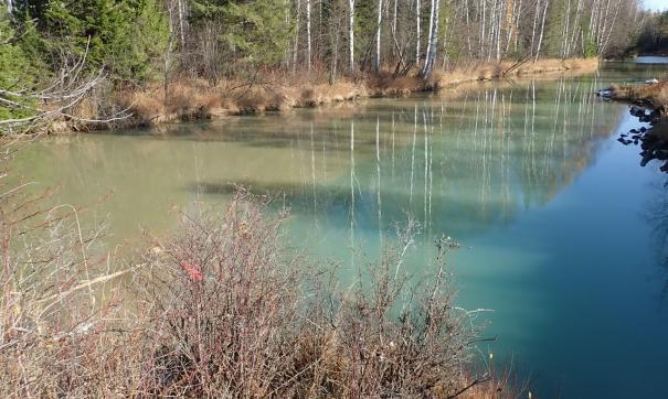Экологи «Живого Шемура» взяли пробы с загрязненных УГМК рек