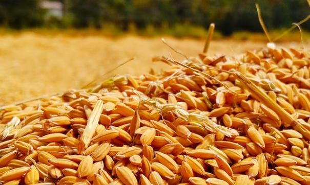 Растет вывоз продукции животноводства и отдельных видов растениеводческой продукции